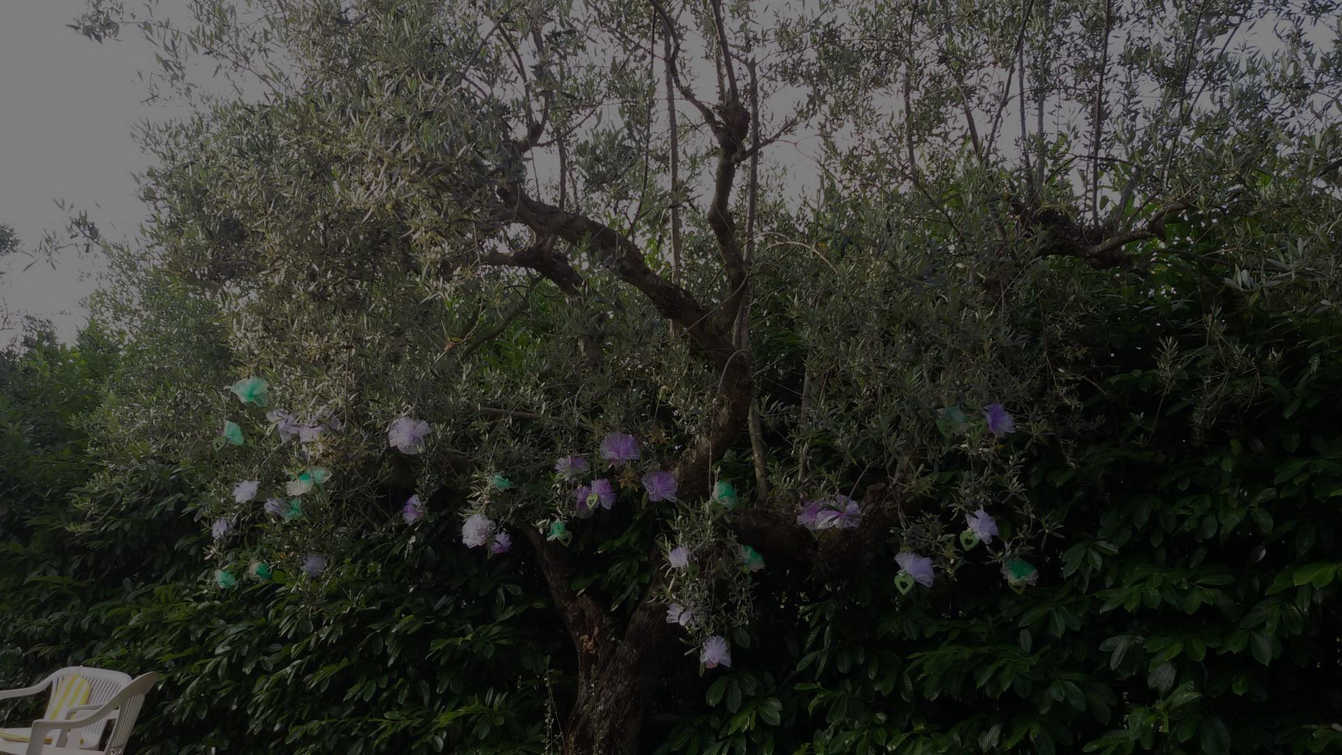 Giardino Casale Ansamagi